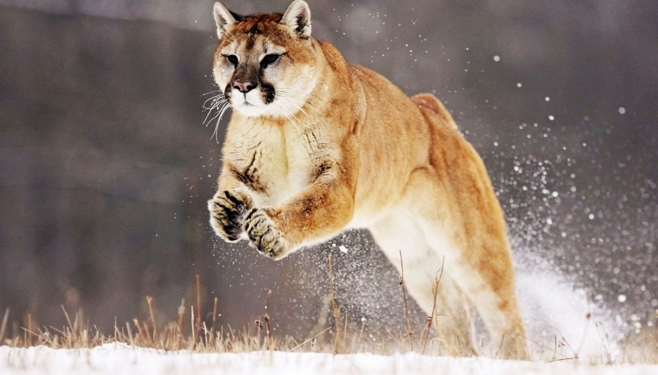 OSX Mountain Lion and FFMPEG Configuration